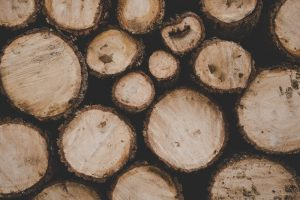 A Detailed Guide on Picking the Right Tree Service for You – Simple Tips